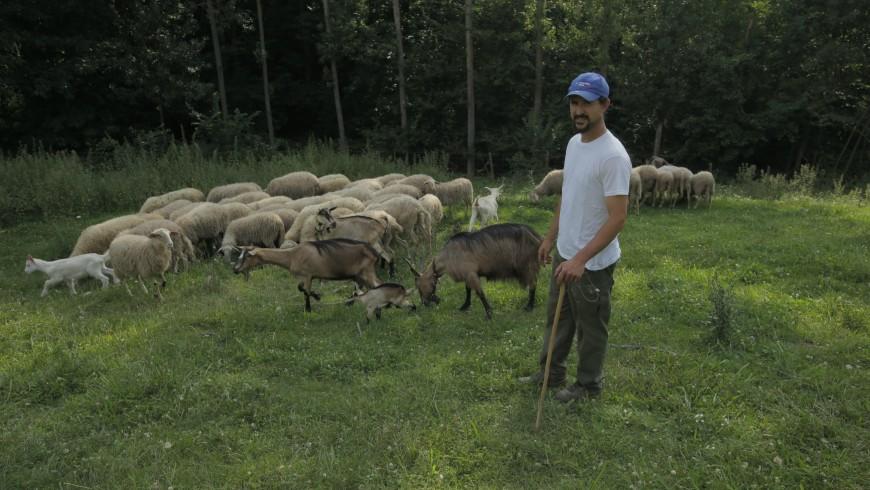 Alessandro Boasso con le sue pecore