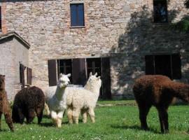 Agriturismo Maridiana Alpaca