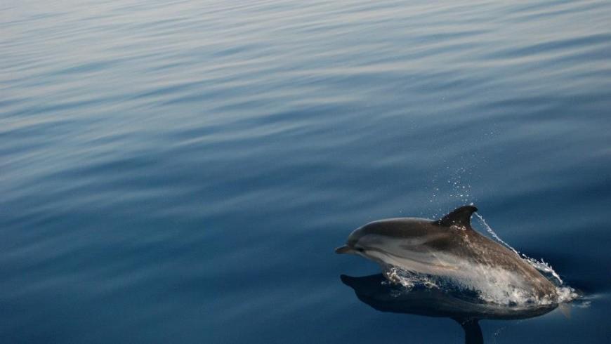 delfino in Grecia