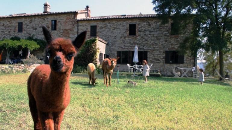 Agriturismo Meridiana Alpaca per una vacanza in fattoria con gli alpaca in Umbria