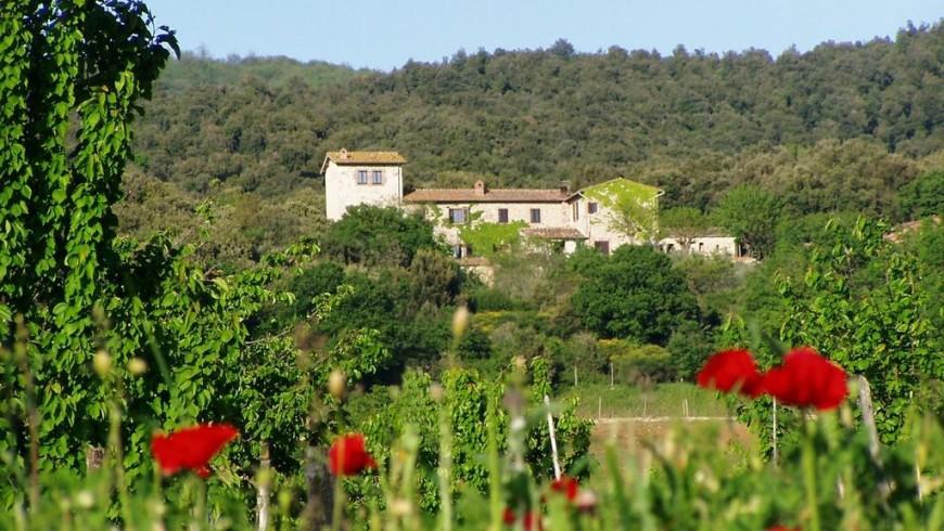 Torre Doganiera, agriturismo biologico tra le colline senesi