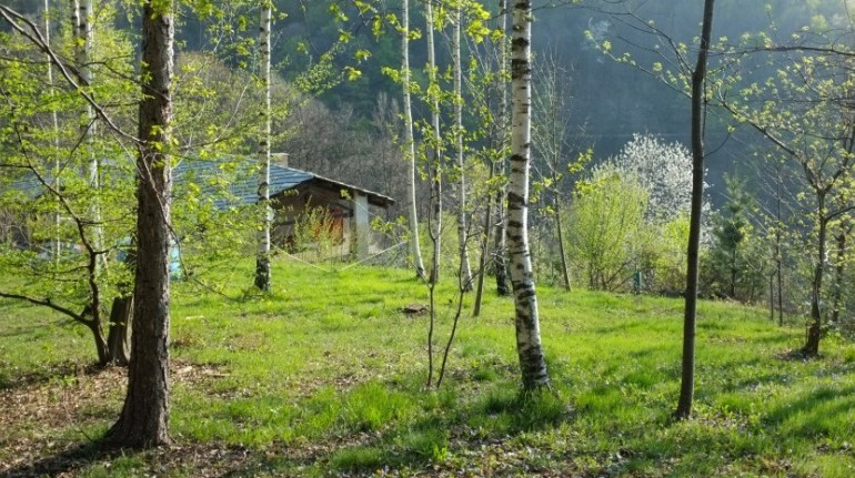 ecobnb nel bosco casa payer