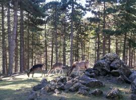 Giardino Alpino di Pietra Corva in Val Tidone