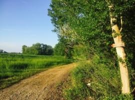 sentiero del Tidone