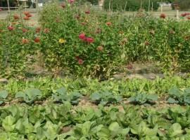 Come fare un orto biologico, Vivaio Forestale Scodogna- Foto parchi ducato