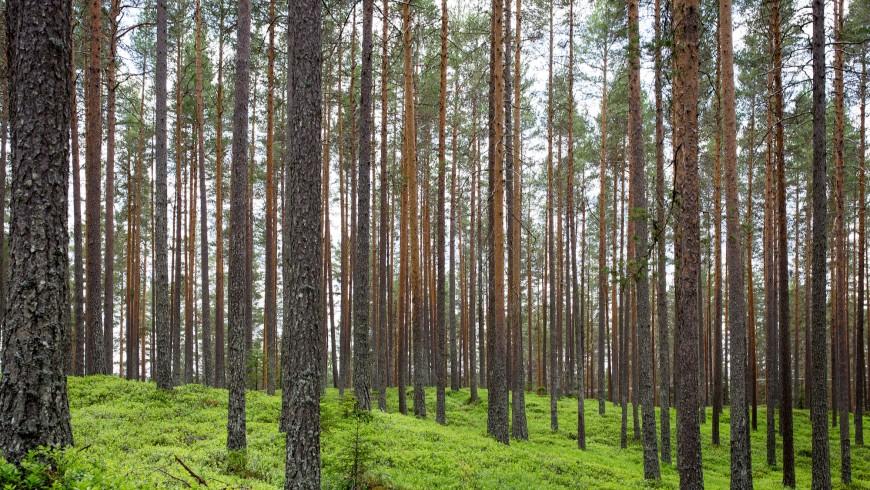 Gli alberi sono il primo passo per combattere i cambiamenti climatici, è per questo che l'obbiettivo dell'Earth Day 2016 è piantare 7,8 miliardi di alberi
