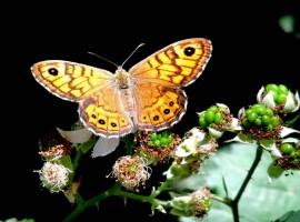 Farfalla nel Parco del Ticinello, Milano, Giornata della Biodiversità