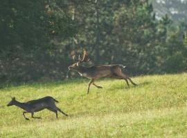 Giornata della Biodiversità Riserva dei Ghirardi, Emilia,