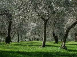Villa Fabri Trevi, Giornata mondiale della Biodiversità