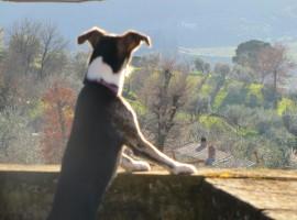 Agriturismo La Fontaccia, Rufina, Chianti