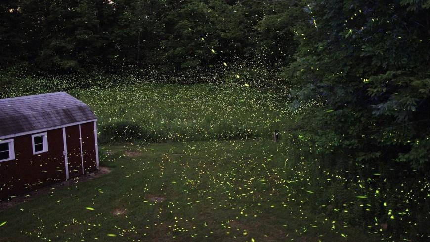 L'arrivo dell'estate e il ritorno delle lucciole