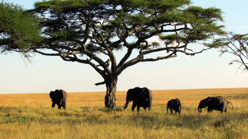 Safari nel Parco Nazionale di Serengeti, Tanzania