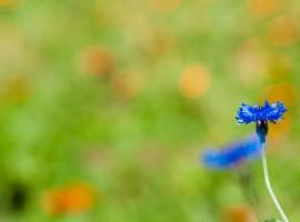 grumes, erbe aromatiche