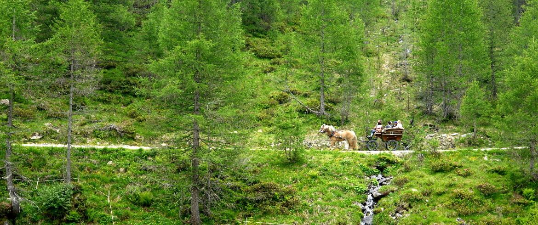 Val Passiria in Carrozza trainata dai Cavalli
