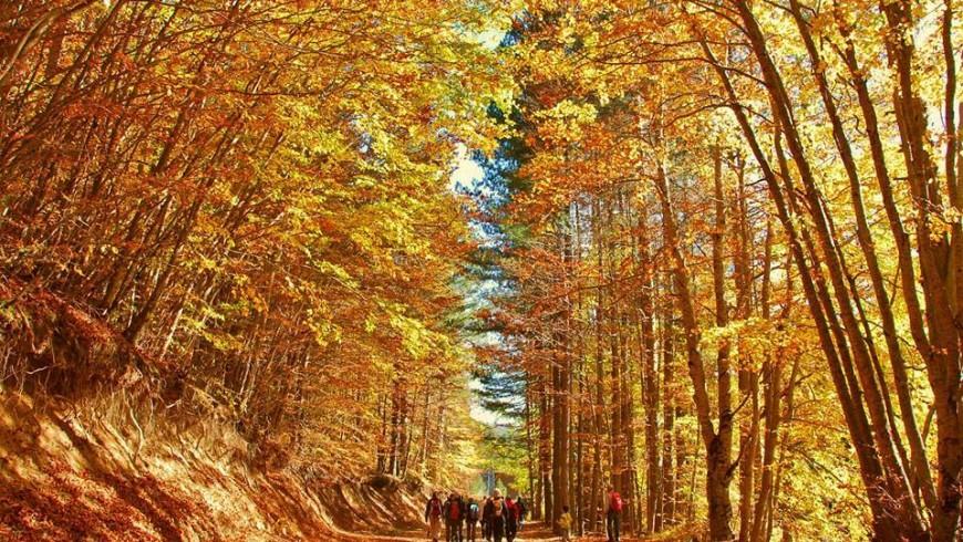 Foliage nel Parco Nazionale della Sila
