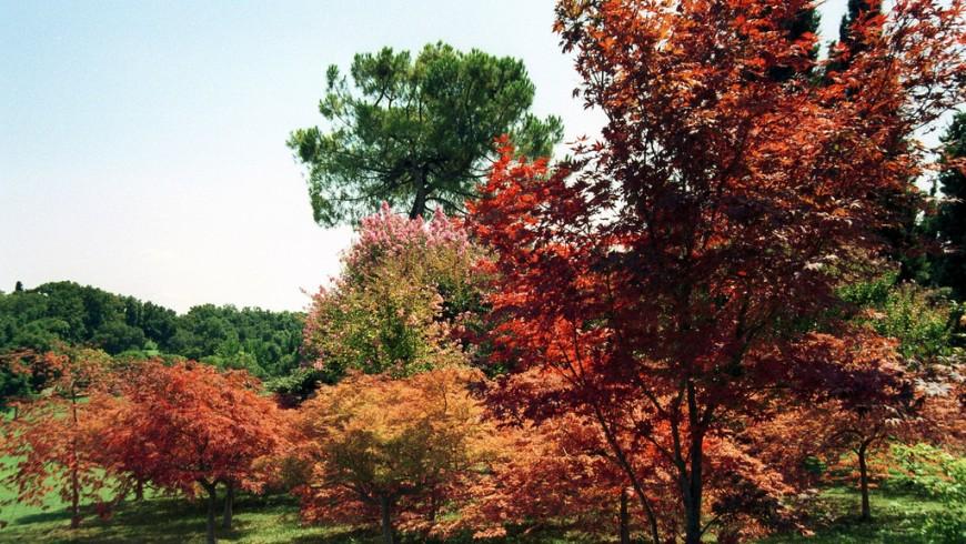 Foliage nel Parco Giardino Sigurtà
