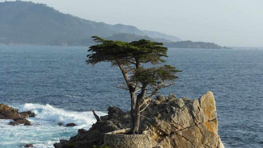 Lone Cypress, l'albero più fotografato della California