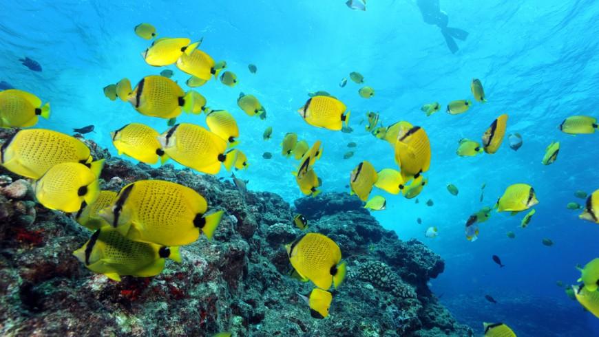 Riserva marina delle Hawai, Papahānaumokuākea