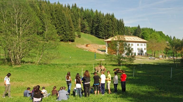 Nel verde dei prati del Parco Naturale Adamello Brenta
