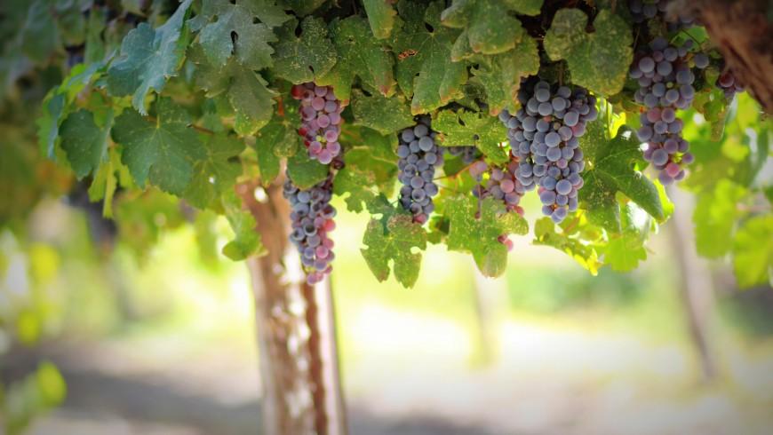 Fuga romantica tra le vigne d'Italia
