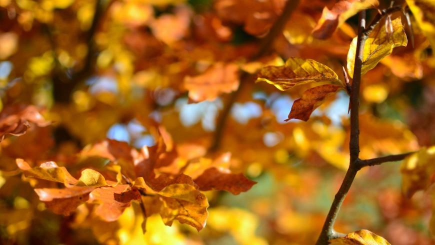 I colori dell' autunno