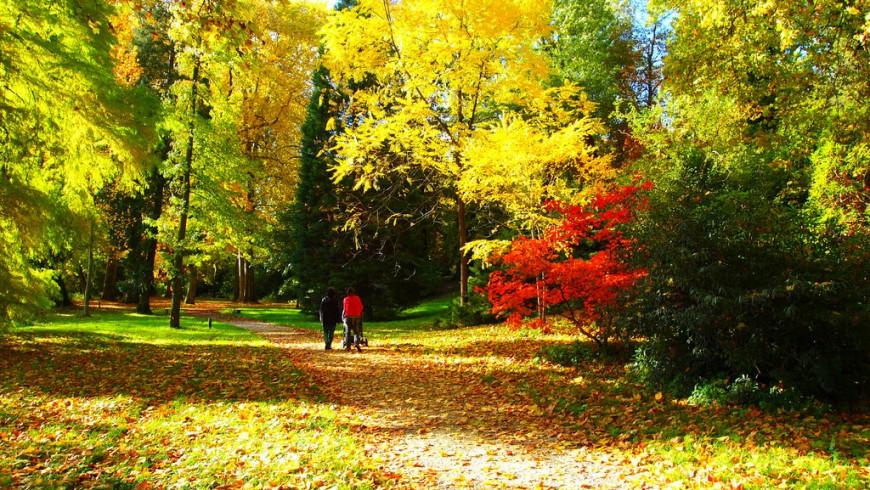 Foliage in Francia