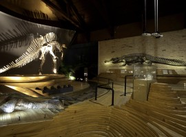 Dinosauro Museo Storia Naturale Venezia