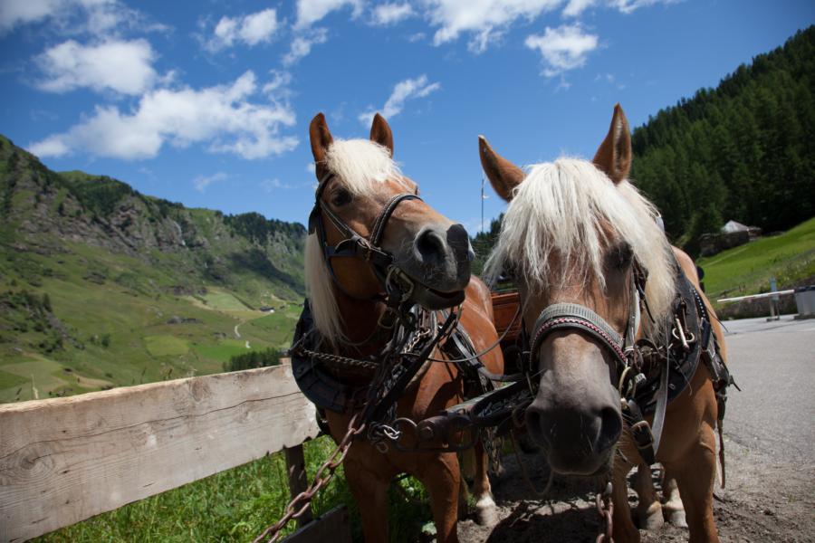 Carrozza trainata dai cavalli, a Plan, Val Passiria