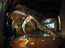 Dinosauro nel Museo di scienze naturali di Venezia