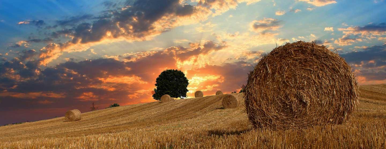 Paesaggio vicino all'agriturismo biologico Acanto Country House, Sirolo, Marche