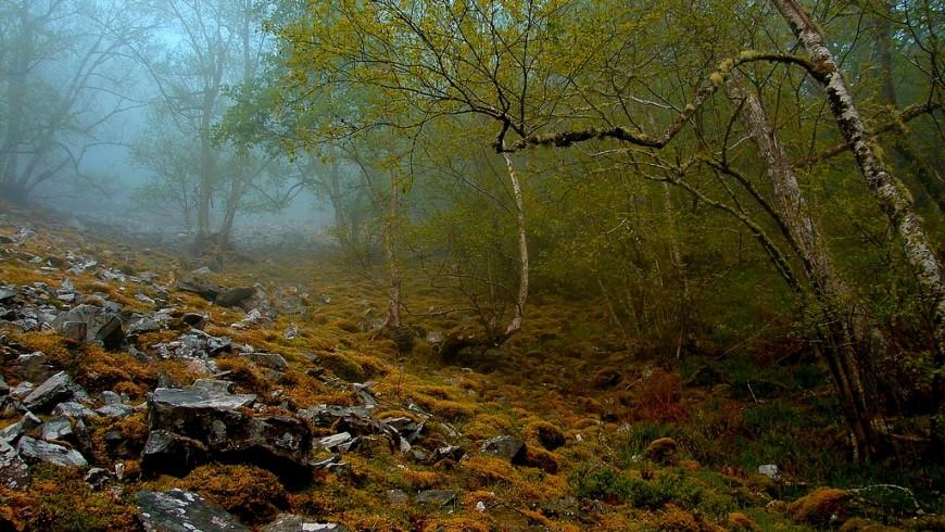 Foresta Muniellos