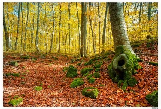 Fageda d'en Jordà (Catalogna), tra i parchi naturali della Spagna