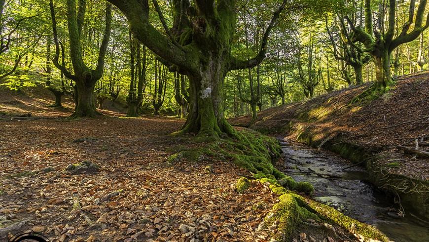 Otzarreta, uno dei parchi naturali della Spagna
