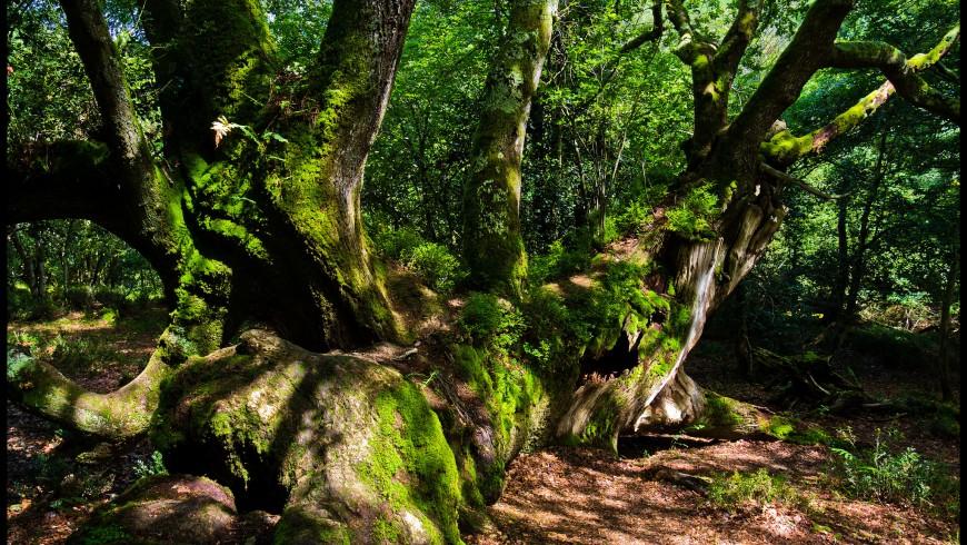 Roble Tumbado. Saja-Besaya, uno dei parchi naturali della Spagna dove ammirare il foliage