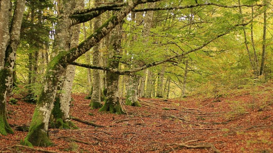 La foresta di Irati e le sue foglie autunnali (Navarra)