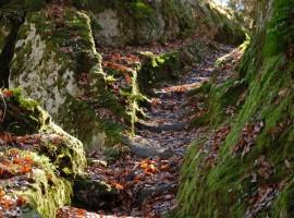 itinerario alla scoperta della Piramide di Bomarzo, scalette scolpite nella roccia