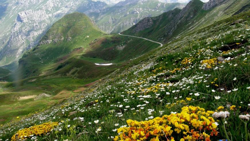 Il Parco Naturale delle Alpi Marittime, da percorrere a piedi da Limone Piemonte
