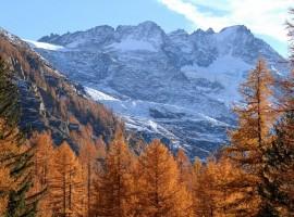 Cogne, Alto Adige, piatto tipico
