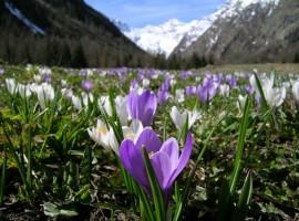 Paesaggio in Primavera