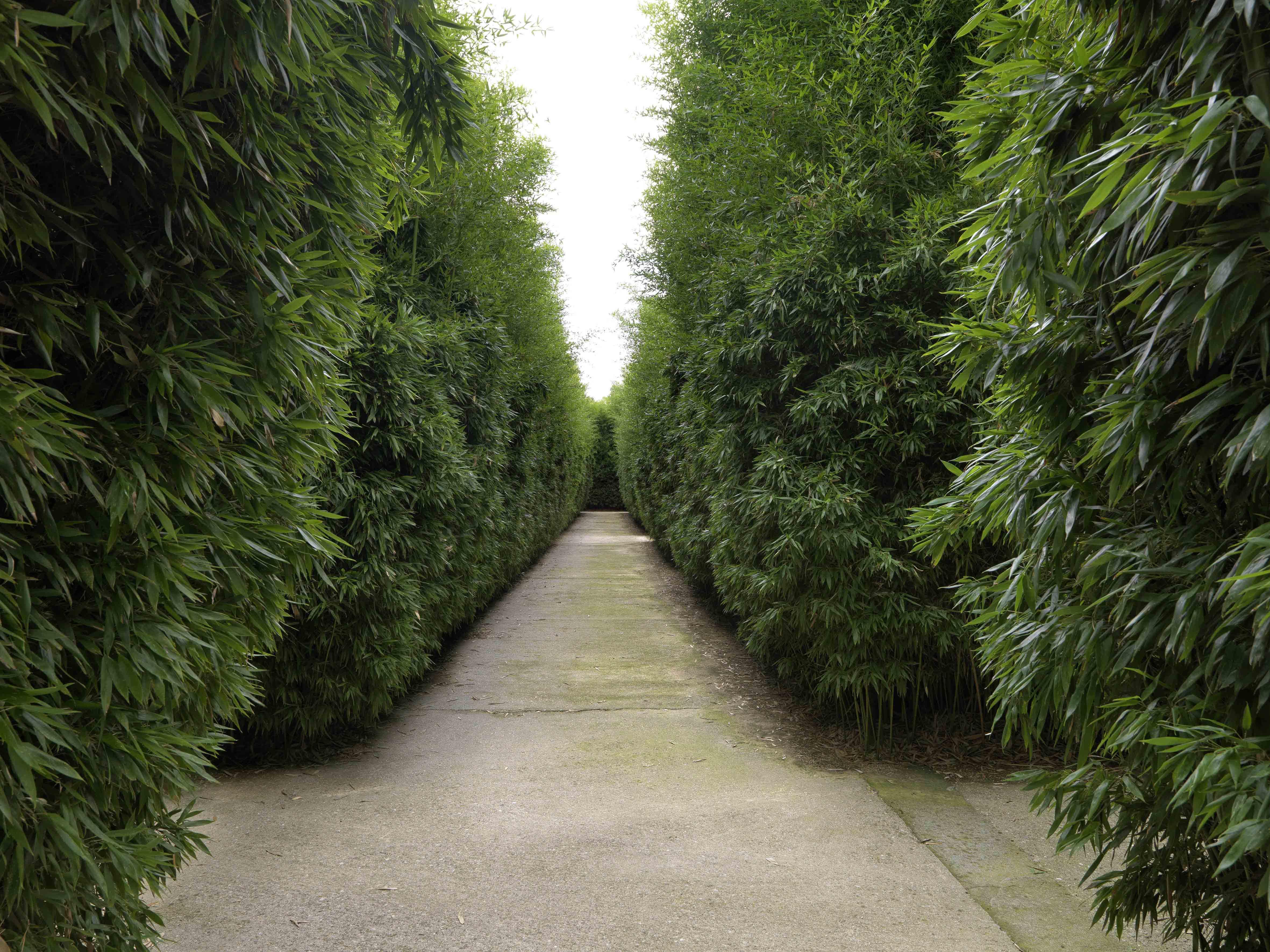 Scorci interni del Labirinto della Masone, Fontanellato (Parma)
