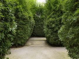 Il labirinto della Masone, Fontanellato
