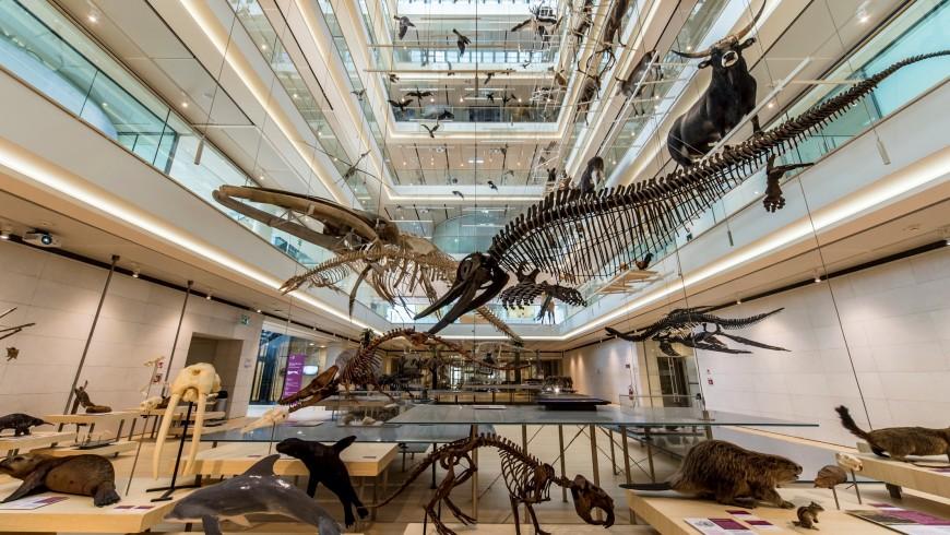 MUSE, Trento. Uno di musei di scienze più belli d'Italia