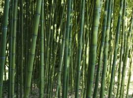 Parete di Bambù