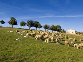 Agriturismo biologico in Abruzzo