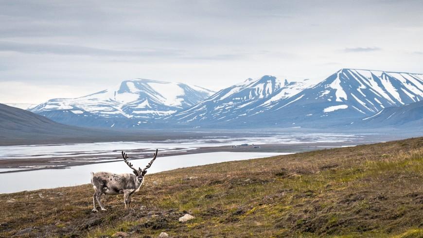 Le isole Svalbard, a metà strada tra la Norvegia e il Polo Nord