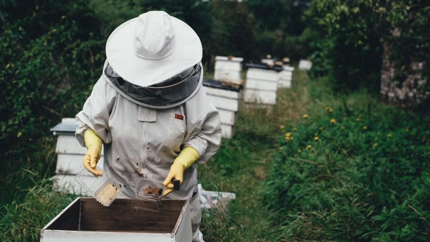 Un'apicoltrice insieme alle sue api