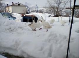 La neve - casale il baronetto