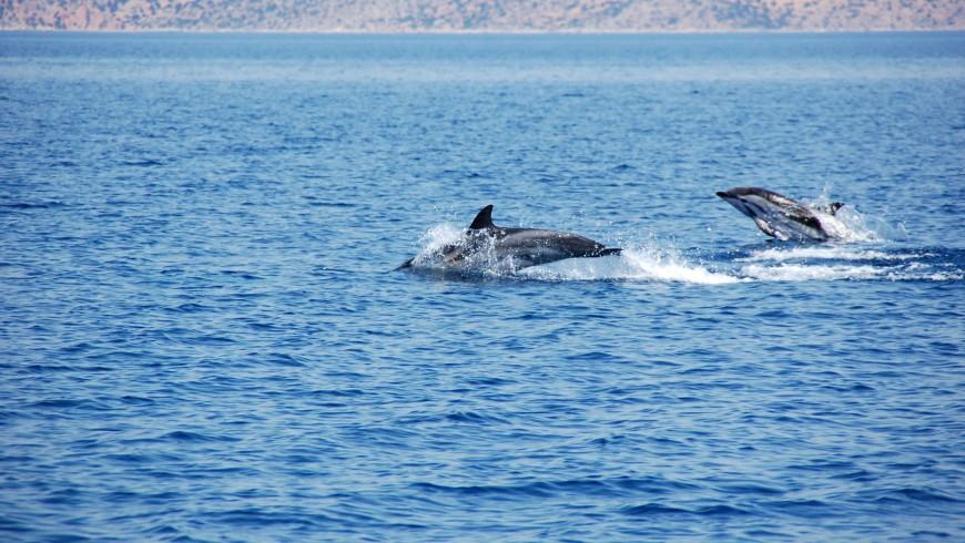 cetaceans (26)