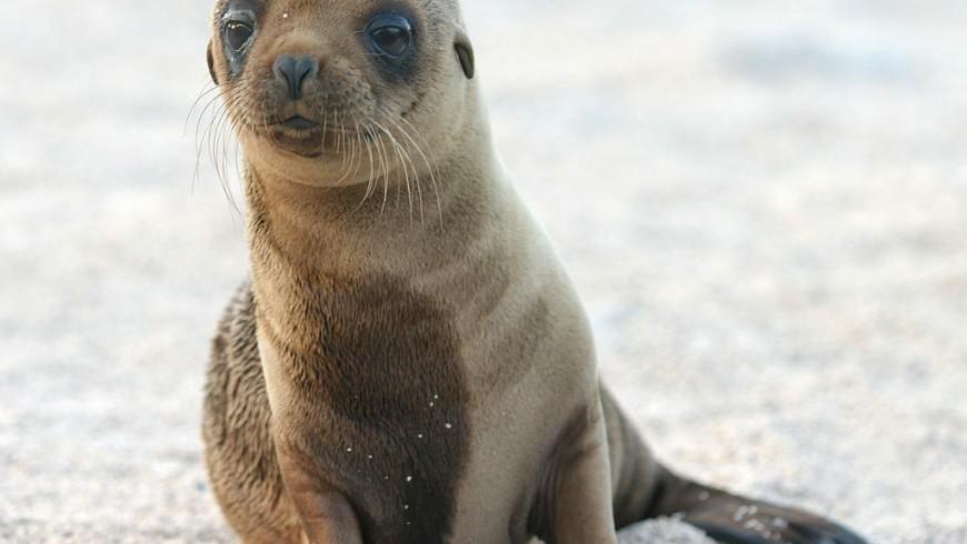 Parco isole Galapagos, tra i parchi nazionali più belli del mondo