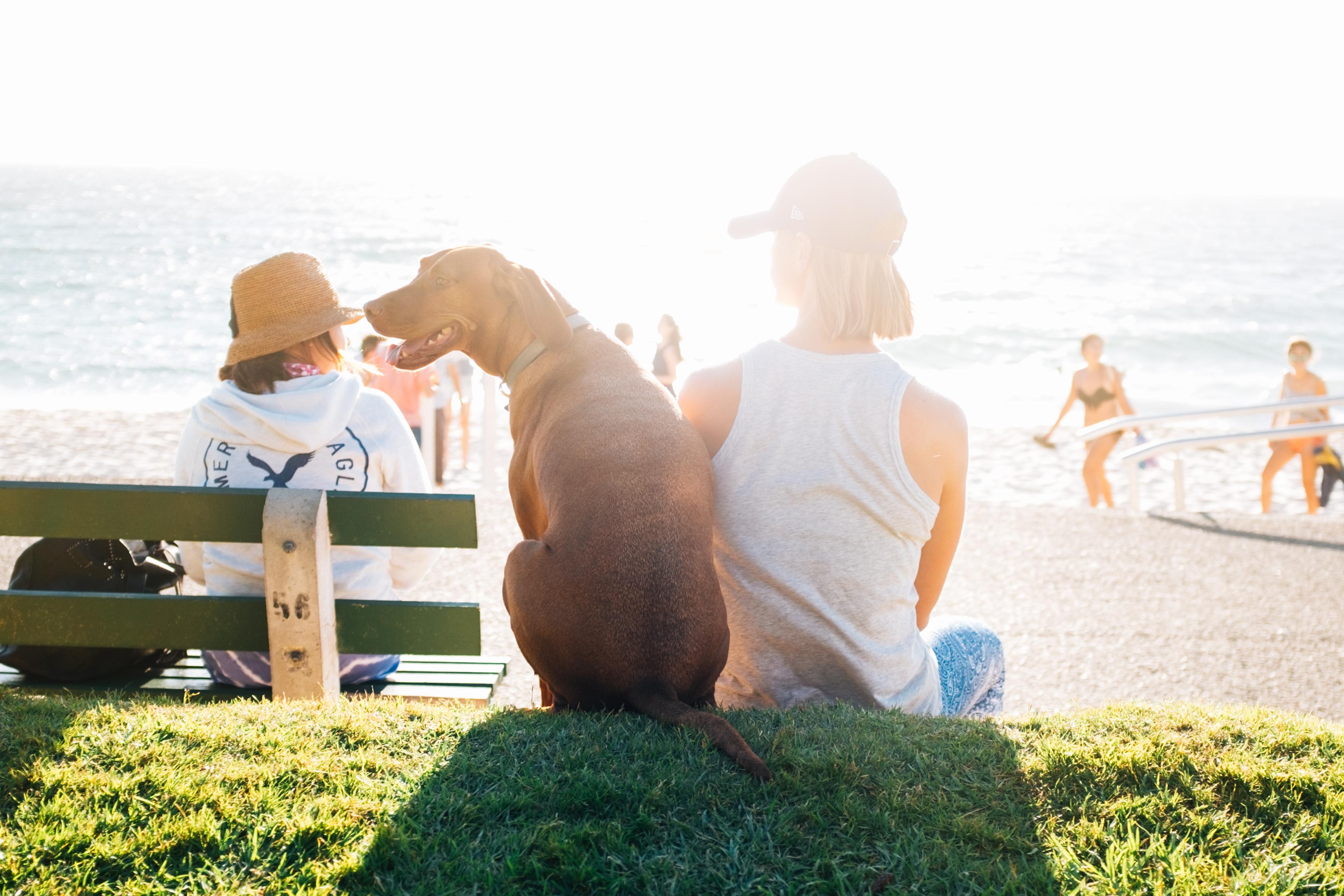 Vacanze al mare con il cane nelle Marche
